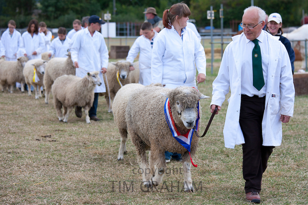 Champion pedigree sheep with handlers at Moreton Show, at  Moreton-in-the-Marsh Showground, The Cotswolds, UK