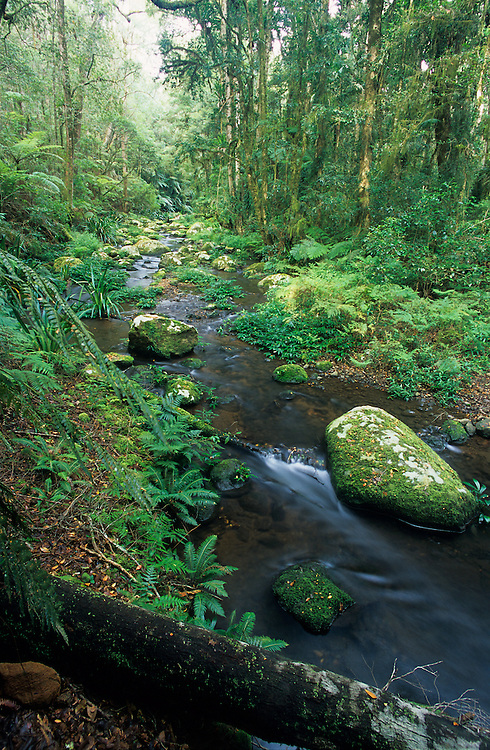 Brindle Creek, Border Ranges National Park