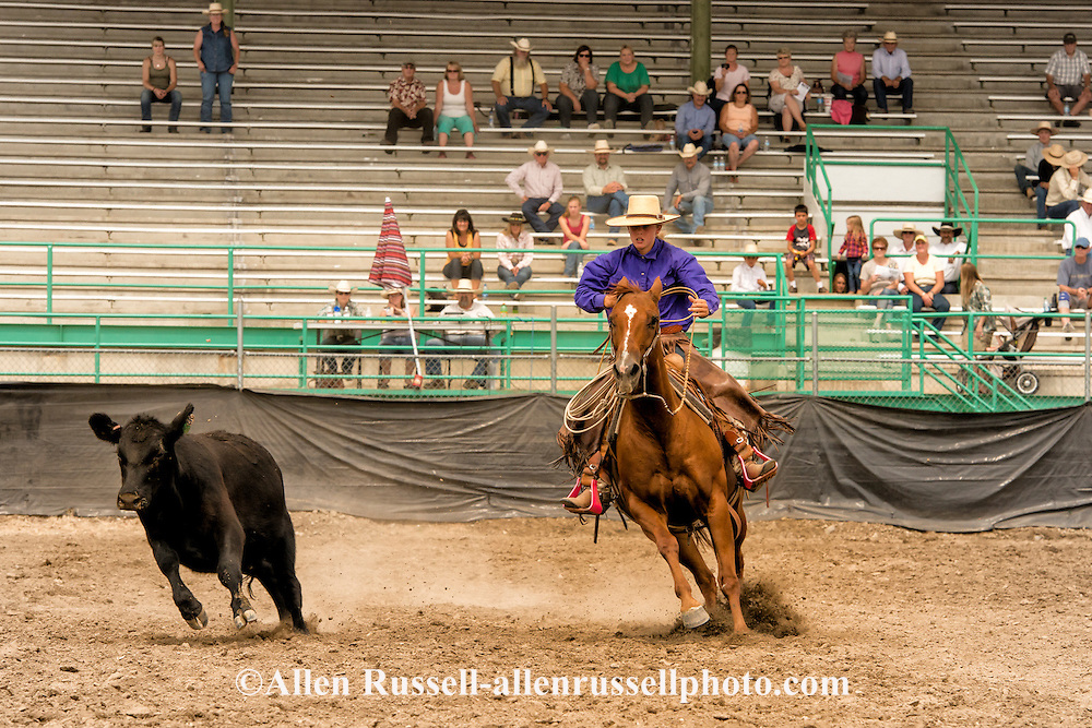 Will James Roundup, Ranch Rodeo, Working Ranch Horse, Hardin, Montana, Gillian Severe, MODEL RELEASED, PROPERTY RELEASED rider & horse