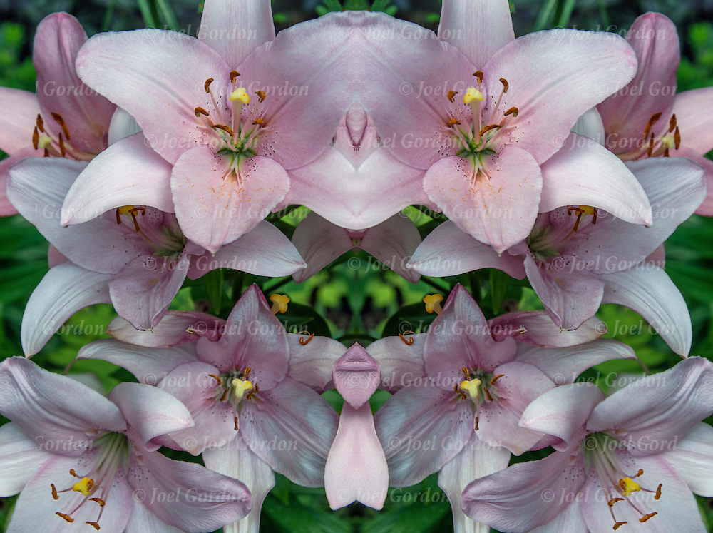 Photographic series of digital flora computer art mirrored. <br /> <br /> Two or more layers used to enhance, alter and manipulate the image, creating an abstract surrealistic mirrored symmetry.
