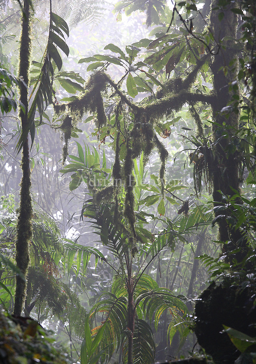 Monteverde Cloud Forest Preserve, Costa Rica. <br />