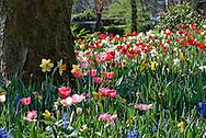Tulips bloom in the gardens of the Groot-Bijgaarden outside of Brussels, Belgium