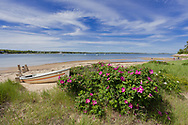 Rugosa roses and an abandoned boat fill the forground of this image from Head of the Bay in Chatham.