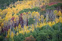 Wasatch Mountain State park puts on a wonderful show of Fall Colors in Utah.
