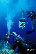 scientist drills core from diseased coral head to study, Texas Flower Gardens, Flower Garden Banks National Marine Sanctuary, off the coast of Texas, USA ( Gulf of Mexico )
