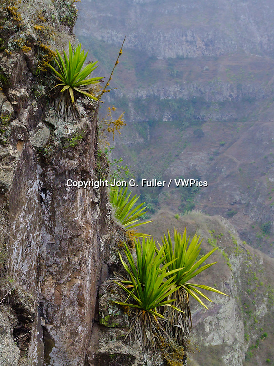 Because Santo Antao is very dry most of the year, one of the most common plants on the steep mountain ridges are agaves.  Republic of Cabo Verde, Africa.