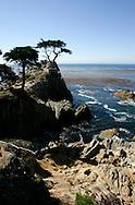 "US-MONTEREY: The ""17 mile drive"" along the coast near Monterey, Lonely Cypres . PHOTO: GERRIT DE HEUS"