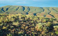 Sagebrush and grasses on hills of high desert at sunrise Umptanum Ridge Eastern Washington USA