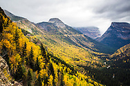 Autumn colors of the west side of the Going To The Sun Road of Glacier National Park.