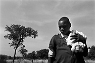 A young boy harvests cotton. Over 2 million people in Burkina Faso depend on cotton for survival. It is the only cash crop that supplements other subsistence crops. Cotton prices have fall to all time lows in recent years largely due to US and European subsidies to domestic cotton producers.<br /> Pad&eacute;ma, Burkina Faso. 10/12/2003.<br /> Photo &copy; J.B. Russell