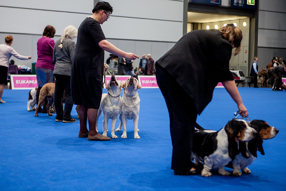 Couple Class Competition at the World Dog exhibition on the Leipzig Trade Fair. Over 31,000 dogs from 73 nations will come together from 8-12 November 2017 in Leipzig for the biggest dog show in the world.