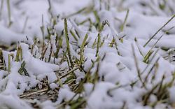THEMENBILD - Neuschnee auf einem Stoppelfeld, aufgenommen am 05. Mai 2019, Kaprun, Österreich // Fresh snow on a stubble field on 2019/05/05, Kaprun, Austria. EXPA Pictures © 2019, PhotoCredit: EXPA/ Stefanie Oberhauser