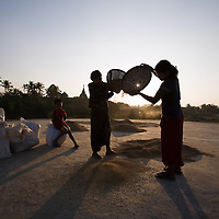 Rice harvest in Mrauk U, Rakhine State, Myanmar.