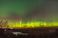 A decent aurora across the north from home in southern Alberta, on Friday the 13th, October, 2017, though these frames were taken after midnight MDT. <br /> <br /> They are part of a 1000-frame time-lapse. Each frame is 3 seconds at f/2 and ISO 6400 wth the Sigma 14mm lens and Nikon D750. <br /> <br /> They show the main auroral oval topped by oxygen reds and spires and spikes that moved slowly westward. Diffuse green patches above turned off and on, and these may be from glowing N atoms and O2+ molecules rather than the usual O atoms.