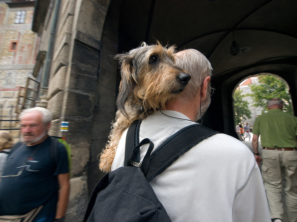 Cesky Krumlov, Krumau/Tschechische Republik, Tschechien, CZE, 25.07.2008: Ein Hund besucht mit seinem Herrn die staatliche Burg und das Schloß von Cesky Krumlov (Böhmisch Krumau/ Krumau) . Die Hochschätzung dieses Ortes durch inländische und ausländische Experten führte allmählich zur Aufnahme in die höchste Stufe des Denkmalschutzes. Im Jahre 1963 wurde die Stadt zum Stadtdenkmalschutzgebiet erklärt, im Jahre 1989 wurde das Schloßareal zum nationalen Kulturdenkmal erklärt und im Jahre 1992 wurde der ganze historische Komplex ins Verzeichnis der Denkmäler des Kultur- und Naturwelterbes der UNESCO aufgenommen.<br /> <br /> Cesky Krumlov/Czech Republic, CZE, 25.07.2008: A dog is visiting with his owner the State Castle of Cesky Krumlov, with its architectural standard, cultural tradition, and expanse, ranks among the most important historic sights in the central European region. Building development from the 14th to 19th centuries is well-preserved in the original groundplan layout, material structure, interior installation and architectural detail. Situated on the banks of the Vltava river, the town was built around a 13th-century castle with Gothic, Renaissance and Baroque elements. It is an outstanding example of a small central European medieval town whose architectural heritage has remained intact thanks to its peaceful evolution over more than five centuries.