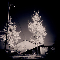 Trees in urban surroundings.