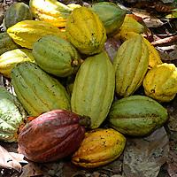 Birongo, La Ruta del Chocolate