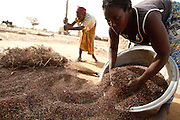 Mamata Kabore, gathers grains of sorghum outside her home the village of Zarcin, Plateau-Centre region, Burkina Faso on Tuesday March 27, 2012.