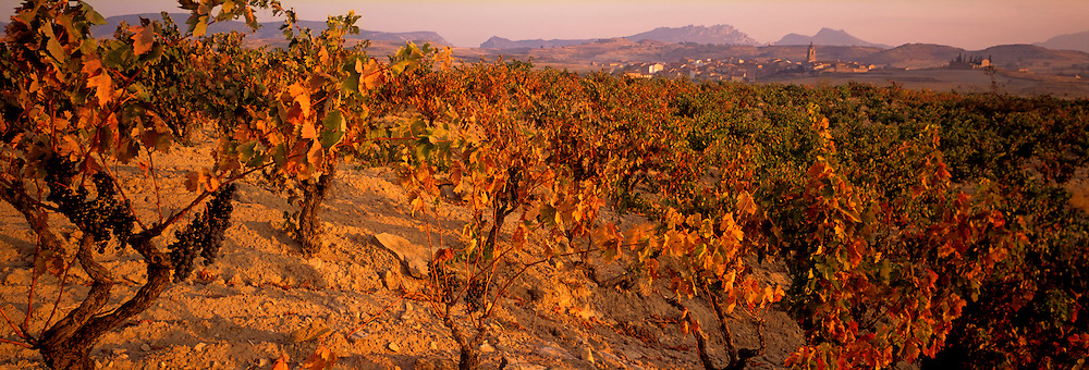 SPAIN, AGRICULTURE La Rioja, vineyards in the most famous wine producing area of Spain below the village of Fonzaleche, west of Logrono