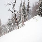 Natalie Segal skis the backcountry off of Jackson Hole Mountain Resort in Teton Village, Wyoming.