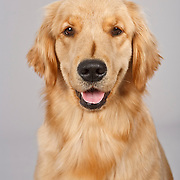 20110225 Labs/Goldens