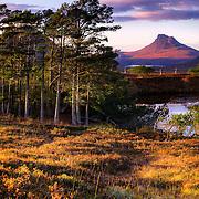 Autumn Pines, Loch Cul Drommanan