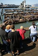 SAN FRANCISCO Sea Lions at Pier 39.