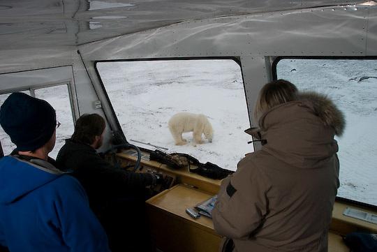 Polar Bear (Ursus maritimus) guests viewing a bear outside their buggy.
