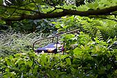 Natural Garden 397