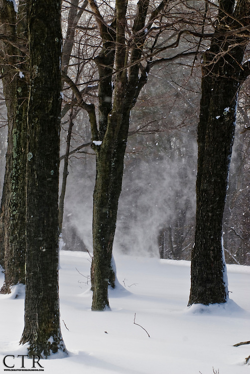 A snow devil spins and forms by the blowing winds entering Chappell's Field at Blue Knob State Park.