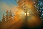 Morning light in the boreal forest<br />Chibougameau<br />Quebec<br />Canada