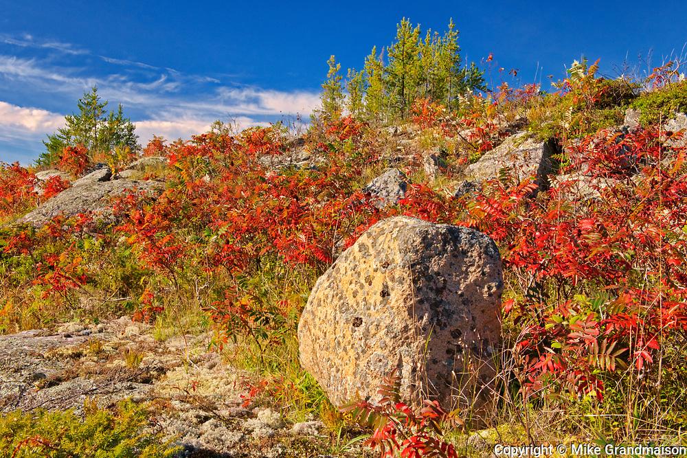 Sumac in autumn color on Precambrian Shiled<br />Whiteshell Provincial Park<br />Manitoba<br />Canada