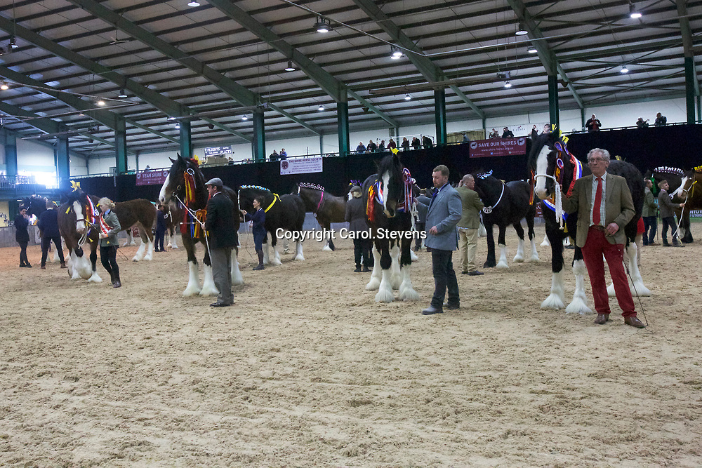 Shire Horse Society Spring Show 2017  <br /> Sunday Grand Parade