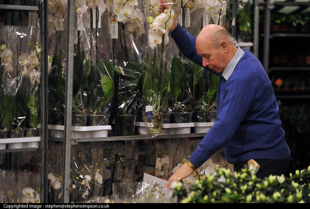 © Licensed to London News Pictures. 15/03/2012. London, UK. A man prepares orchids for sale. The Mothering Sunday sales rush is on for flower growers, suppliers, florists and retailers amongst the Flowers at the New Covent Garden Flower Market on March 15th 2012 in London, England. New Covent Garden Flower Market is London's premier wholesale market stocking the widest range of flowers, plants and foliage in the UK. The run up to Mothers' Day is crucial in the flower selling calendar as Mothers' Day sales are condensed into about four days making the market very busy. Traditionally, Mothering Sunday was a day when children, mainly daughters, who had gone to work as domestic servants, were given a day off to visit their mother and family. Today, Mother's Day is a time when children give flowers and cards to their mothers, and generally pamper them..  Photo credit : Stephen SImpson/LNP
