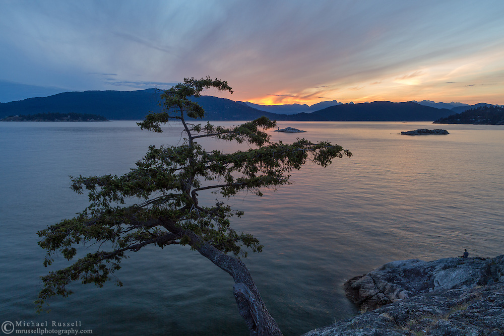 Sunset view from Juniper Point at Lighthouse Park in West Vancouver, British Columbia, Canada. In the background you can see the Grebe Islets, Bowen Island, and the mountain peaks in the Sunshine Coast's Tetrahedron Range.  Judging from the cones the tree in the photograph looks to be a stunted Douglas Fir (Pseudotsuga menziesii) and not a Juniper.