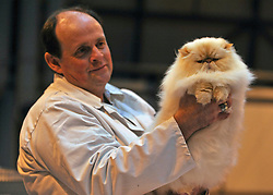 © Licensed to London News Pictures. 19/11/2011, Birmingham, UK.  A cat is judged during the show. The Supreme Cat Show held today, 19 November in the National Exhibition Centre, Birmingham.  The event is a highlight in the cat show calendar and is regarded as the feline equivalent of Crufts. Photo credit : Stephen Simpson/LNP