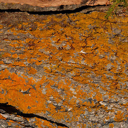 Driftwood and Lichen Encrusted Rock Face, Holbrook Island Sanctuary, Brooksville, Maine, US