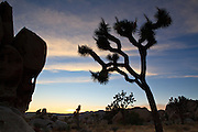 Joshau Tree National Park is a beautify mix of the intriguing Joshua Trees and a compelling landscape of mounds of boulders.