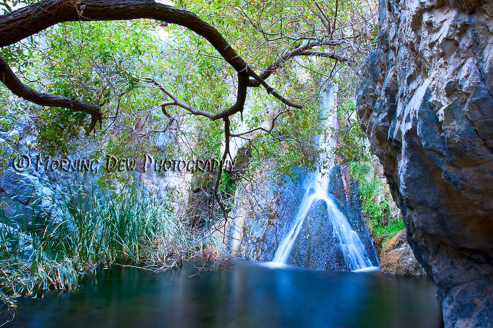 The spring feed waters of Darwin Falls create a cool desert oasis in Death Valley.