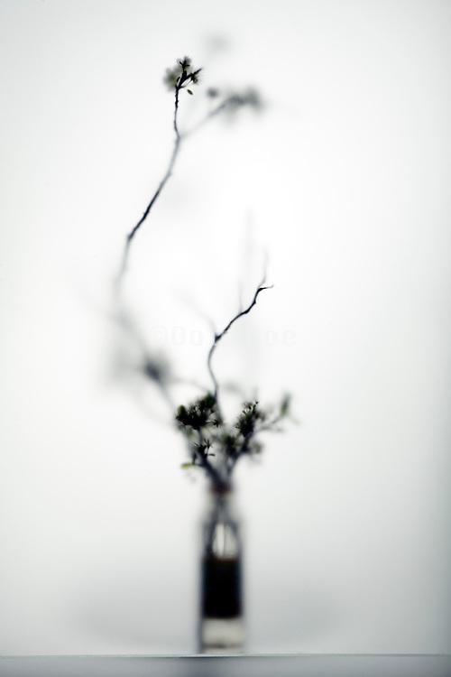 ikebana style blossoming twigs