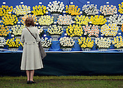 © Licensed to London News Pictures. 21/05/2012. Chelsea, UK. A woman looks at a display of Daffodils.  Press preview of The Chelsea Flower Show today 21 May 2012. The world's most famous flower show, which has been held in the grounds of the Royal Chelsea Hospital since 1913, will be open to the public from Tuesday. Visitors are expected to flock in their thousands to see displays of plants, flowers and furniture for ideas on how to decorate their gardens.. Photo credit : Stephen Simpson/LNP