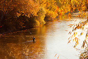Fisherman on the Boise River, Boise Greenbelt, below railroad trestleg