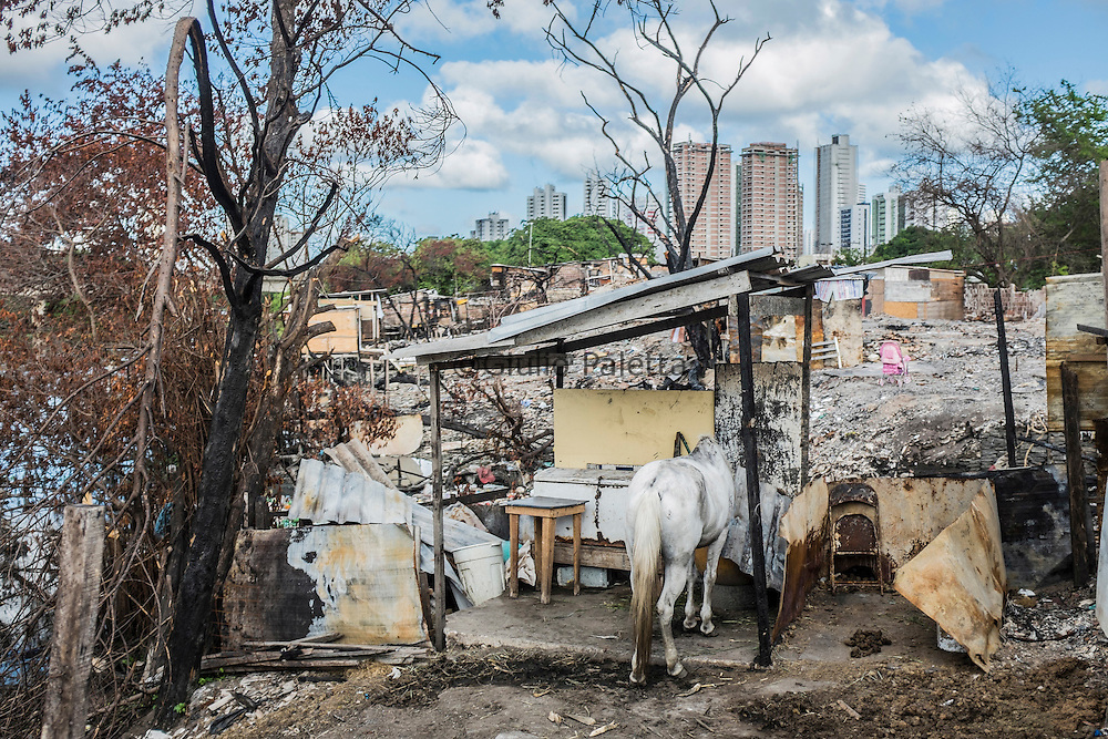 Most of the people who got infected with Zika virus lives in extremely poor neighbourhoods with poor sanitary conditions, like here in the slum of Santa Luzia in Recife, Pernambuco