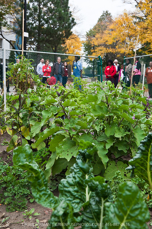 FoodShare's Community Food Animators bus tour 2010 visits the Firgrove community garden, animated in partnership with the AfriCan FoodBasket.