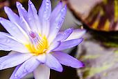 Fine Art-Flowers