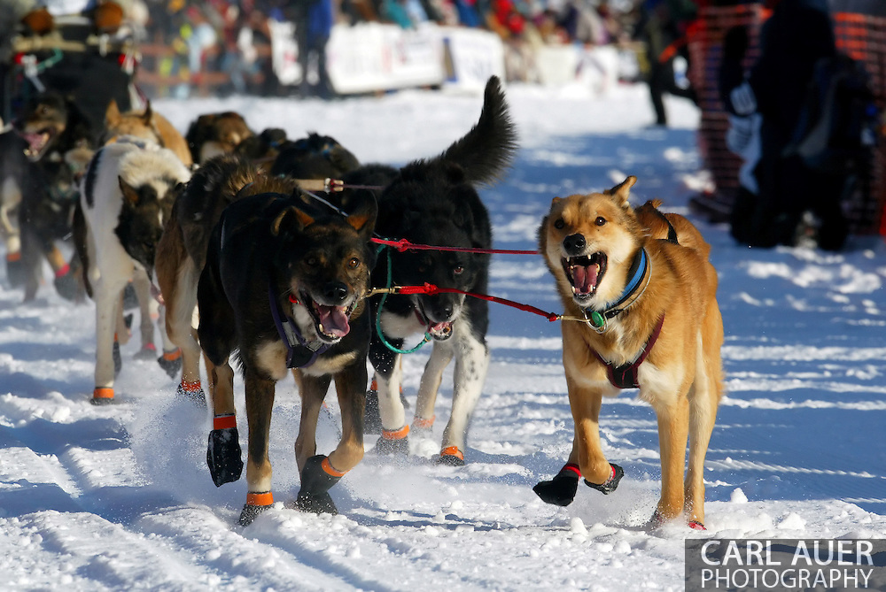 3/4/2007:  Willow, Alaska -  The lead dogs set a fast pace for the dog team of Veteran Cim Smyth of Big Lake, AK at the start of the 35th Iditarod Sled Dog Race