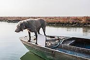 Venezia - Green city. Vita in laguna