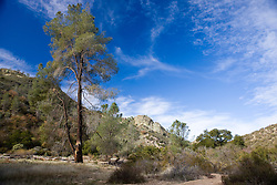 Trees and rock formations along the Old Pinnacles Trail, Pinnacles National Monument, California, United States of America