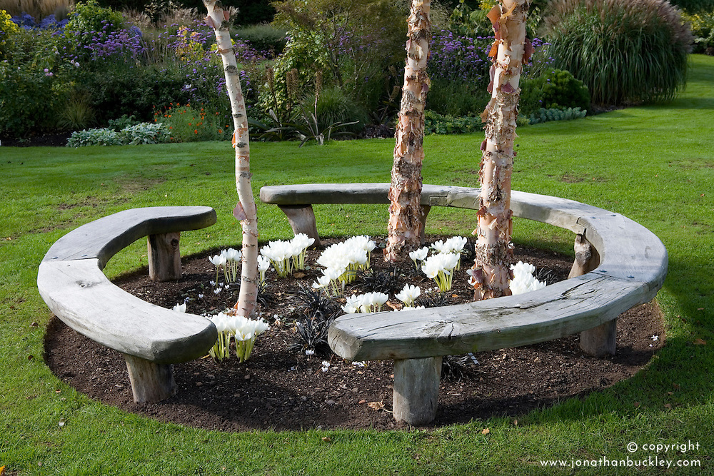 Curved wooden bench seat forming circle around Betula nigra 'Heritage' trees with Colchicum speciosum album and Ophiopogon planiscapus 'Nigrescens' planted at their base. Design: John Massey