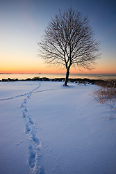 A lone tree stands in the fresh snow at New Castle Common at sunrise.  New Castle, New Hampshire.